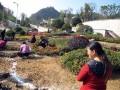 园林绿化养护施工