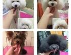 宠物家专注宠物洗澡美容