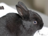 宠物兔批发请看