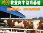 山西活畜交易市场、山西活牛交易市场、牲畜市场