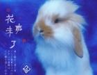 批發零售寵物兔