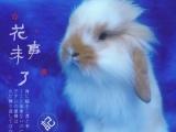 批发零售宠物兔