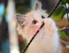 潍坊哪里有正规宠物店买卖布偶猫 潍坊较便宜布偶猫多少钱