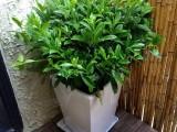 温州永嘉专业绿植养护