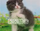 杭州本地猫舍出售英短蓝猫 蓝白 渐层等上门看送上门