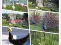 海狮表演出租报价鹦鹉展示表演百鸟展租赁公司