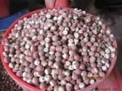 广东浦特公司供应价格优惠的肇实芡实 肇庆芡实米是实用的