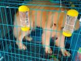 温州宠物托运 免费上门取宠物