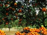 成都市內創.粟林農業攝影 農產品攝影 農業企業攝影 商業攝影