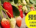 崇贤草莓采摘园欢迎您
