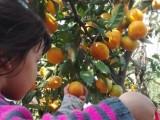 金秋 上海农家乐一日游 采葡萄摘桔子 钓鱼划船烧烤