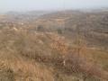 西峡田关200亩黑栗园对外流