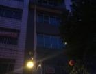 柳城繁华广场附近白阳南路整栋楼旺铺出租 五层半