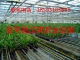 温室苗床-厂家供应-