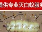 包效果专业提供灭鼠,杀苍蝇,灭白蚁灭蚊子,杀(耗子小强)