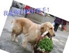 中山伊甸护卫犬训练基地、狗狗寄养,让您出行无忧