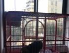 5个月的比格犬1500元(公)