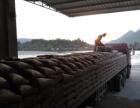汕尾光大水泥厂家-实力超群-价格优惠