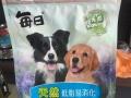廉江萌宠宠物,为你爱犬健康护航