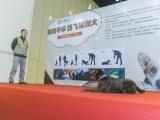 鄭州飛碟訓犬基地- 10年以上訓練經驗