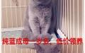 南京家养猫咪找领养哦