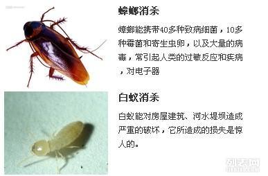 黄骅消杀公司,如何杀蟑螂,灭蟑螂
