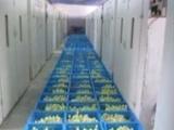 大品种鹅苗批发-江苏金豪孵化场欢迎全国新老客户前来考察与订购