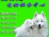 上海青浦区哪里有动物火葬场青浦华新镇宠物殡葬火化电话上门接送