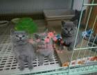 南宁哪里的蓝猫比较便宜健康 南宁什么地方可以买到蓝猫