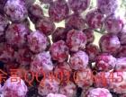 老北京冰糖葫芦的制作技术