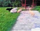 西苑宠物猫狗寄养 常年代养老年宠物 单间寄养入住 可接