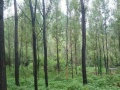 南召县3200亩林地出租,有养殖设备