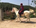 强兴农业科技有限公司马主招募 骑马12元/小时