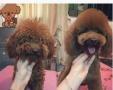 宠物美容造型护理