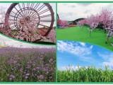 周末约起体验深圳特色农家乐性价比更高的心湖生态园