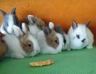 常年批发,零售各种宠物兔