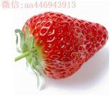 辽宁丹东.东港九九草莓