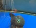 鱼缸和缸内几条鱼打包