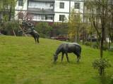 华阳景观雕塑 重庆动物雕塑 贵阳雕塑公司 陕西标志性雕塑