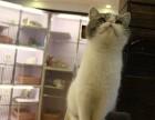 广州哪里有最正规最大的宠物店,我想养只加菲猫