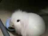 松鼠蜥蜴刺猬兔子蜜袋鼯微店淘宝交易