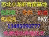 2017年龙虾苗价格2017年龙虾苗多少钱一斤