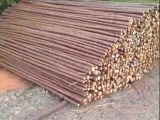 竞秀植树杆杉木杆