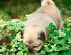 西安专业知名宠物摄影(包括外景,室内,上门拍照)