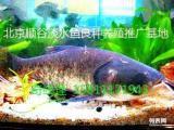 大同地区观赏鱼出售 锦鲤鱼苗批发 求购鱼苗养殖技术
