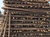 通州原木杆松木杆怎么批发