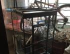 出售鹦鹉笼一个