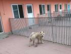 西坝河宠物寄养猫咪狗狗长期托管养老包月上门接送
