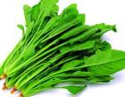 东莞信誉好的蔬菜配送公司是哪家——东莞专业蔬菜配送