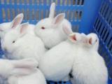 快递24小时签收 兔子荷兰猪龙猫 快递包活到货